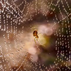 In the Light... (Ody on the mount) Tags: anlsse bokeh fototour gegenlicht hdr lichtreflexe makro nahaufnahme schwbischealb spinne spinnennetz tiere 500x500