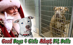 "Santa Claus and his Pit Bull with a message ""Good Boys & Girls Adopt Pit Bulls"" (Beverly & Pack) Tags: santa santaclaus santaclause pitbull pitbulls dog dogs puppy white luna shelter adopt adoption save rescue goodlist goodboysandgirls goodboys goodgirls finger wavingfinger advice cage tshirts tees hoodies forsale gifts doglovers pitbulllovers animalrescue animaladvocate fatherchristmas christmas reindeer rudulph"