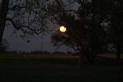 DSC00443 (carrie_20001jf) Tags: supermoon moon morning night astronomy texas sky texassky supermoon2016 2016 skyporn nature texasnature
