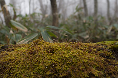 _IMG2002 (YASSAAN) Tags:     pentax k1 japan mountain climbing fa31