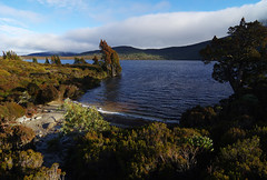 Day 2: Sunny morning at Lake Will (Northern Adventures) Tags: tasmania australia may autumn fall hike hiking walk walking trek trekking track tracking backpacking journey trip adventure outdoor outdoors nature scenery scenis grass vegetation overlandtrack overland lakewill lake will morning sun light sunlight