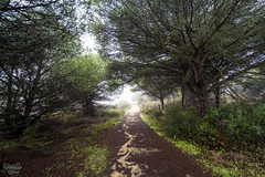 El Rompido - Parque Natural (Dancodan) Tags: nikon d7100 parquenatural elrompido huelva naturaleza paisajes nikkor1024mmf3545gdxswmedifasphericalafs angular plantas niebla bruma 500px fb