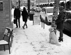 One Winter Day... (Sherlock77 (James)) Tags: calgary kensington snow winter streetphotography people dog