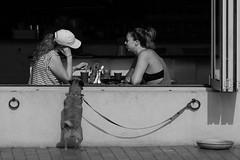 Hey!! Were's MY latte!! (Joep Buijs Photography) Tags: sydney coogee beach coffee dog couple bar