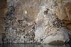 Bharal, Himalayan blue sheep, India 2016 (reurinkjan) Tags: india 2016 ©janreurink himachalpradesh spiti kinaur ladakh kargil jammuandkashmir pseudoisnayaur bharal himalayanbluesheep bharalbluesheeprnapoརྣ་ rnabaརྣ་བ་ himalayamountains sunrise himalayamtrange himalayas landscapepicture landscape landscapescenery mountainlandscape indusriver sengetsangpo