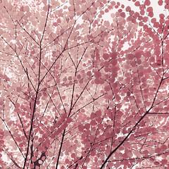 Autumn Design (Vesa Pihanurmi) Tags: leaves lime linden fall autumn colors branches design fabric textile bright nature art