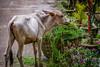 Mmm fresh greens (Travelling Rats) Tags: bangladesh srimongal bestofbangladesh