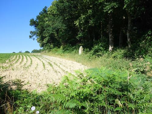Le menhir dit « La Roche » près d'Uzel - Côtes-d'Armor - Juillet 2015 - 01
