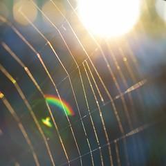 Details from my Neighbourhood (Ben Wightman) Tags: sunset macro spiderweb lensflare macromondays detailsfrommyneighbourhood