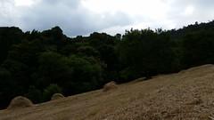 Camino de Naranco