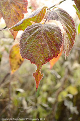 _DSC4455 (1) (frankfoto) Tags: morning autumn frost ithaca fingerlakes westhill ecovillage