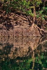 Mangrove Reflections (Rodney Campbell) Tags: reflection water river au australia wa gorge westernaustralia cpl geikiegorge geikie kingleopoldranges