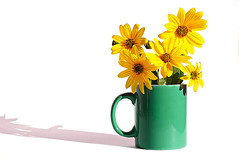 flower infusion (brescia, italy) (bloodybee) Tags: shadow stilllife white flower green cup yellow fun petals tea drink humor infusion mug jerusalemartichoke topinambur 365project