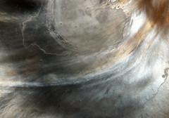 Tree oyster (Isognomon isognomum) shell under side close up (shadowshador) Tags: life sea shells tree beach up sand shiny close wildlife sandy smooth shell glossy oyster biology animalia mollusca bivalvia invertebrate invertebrates scientific taxonomy classification eukaryota malacology conchology lophotrochozoa conchifera opisthokonta pterioida pteriomorphia neomura holozoa filozoa isognomon isognomonidae isognomum pterioidea