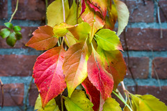 Leafs (zivko.trikic) Tags: city autumn abstract holland fall netherlands colors town leiden october background cover leafs 2015