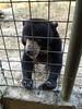 Sun bear (Animal People Forum) Tags: bear rescue sun project indonesia wildlife palm borneo oil rehabilitation palmoil sunbear wildliferehabilitation samboja lestari