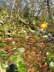 Winterspaziergang Mörschieder Burr_0008 (AndreasHerbert) Tags: mörschied mörschiederburr nationalparkhunsrückhochwald