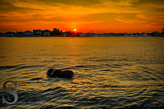 Evening dog paddle (Singing With Light) Tags: sunset summer photography fisherman dock sony kitlens ct august milford 24th 2015 mirrorless gulfbeach sony16mm28 singingwithlight singingwithlightphotography alpha6000 sonya6000