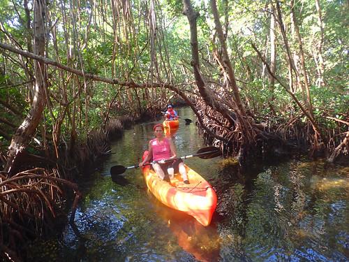12_1_16 Kayak Tour Sarasota 05
