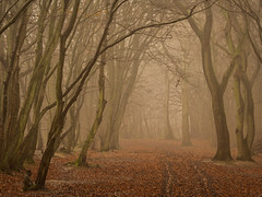Back from Somewhere (Damian_Ward) Tags: wood morning trees mist misty fog forest woodland photography buckinghamshire foggy beech thechilterns chilternhills damianward ©damianward