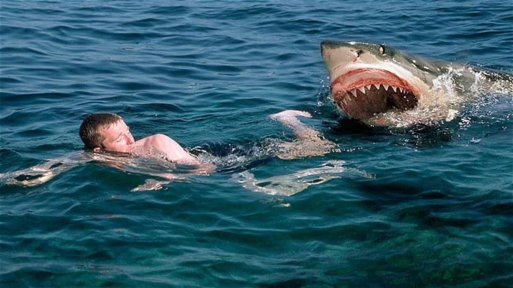 cá mập bò