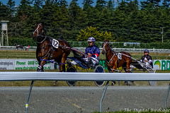 DSC05106.jpg (The Digital Birdcage) Tags: horseracing burnoff harnessracing markjones race8 ashburtonraceway colindefilippi twicethedelight