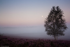 Heather landscape misty sunrise (EvelyneRenske) Tags: 2016 boom mist renderklippen uitzicht