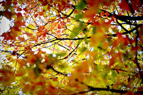 290.Autumn