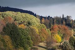 Au soleil couchant (mrieffly) Tags: htrhin hautesvosges alsace geishouse coucherdesoleil automne arbres canoneos50d 100400issériel