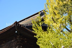 151107 (finalistJPN) Tags: autumntree autumnleaves autumncolor fall gingkotrees zenkojitemple autumnsky bluesky yellowleaves discoverjapan traveljapan japanguide nationalgeographic discoverychannel stockphotos availablenow