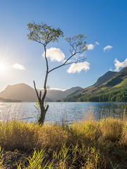 Buttermere Birch Tree (Stephen Tierney.) Tags: lakedistrict wwwstephentierneycouk stephentierney landscape ef1635mmf4 canonef1635mm lonetree water buttermere cumbria sunrise summer canon6d lowsun clouds