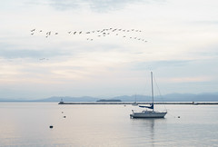Geese Over Burlington Harbor VT (S&L Smith) Tags: a7ii canon canonfd 50mmf14 burlington vermont lakechamplain burlingtonharbor waterscape sailboats