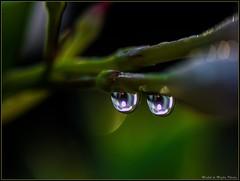 The Look !!! (michel di Méglio) Tags: macro drops marseille macromonday