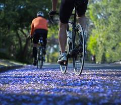 Riding on sunshine_c (gnarlydog) Tags: canontv1650mmf14 shallowdepthoffield flowers adaptedlens manualfocus cmountlens colorful jacarandatree australia riding bicycle bokeh surreal