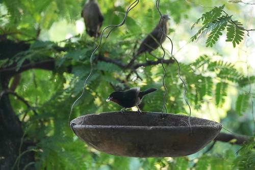 パンを食べに来る鳥