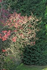 coup de soleil d'automne (philippeleclercq21) Tags: arbre couleurs automne rayondesoleil lumire