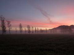 Nebelallee (christinaobermaier) Tags: nebel morgenrot sunrise dawn allee alley trees mountains mist misty fog foggy bavaria schlehdorf kochelsee deutschland germany street