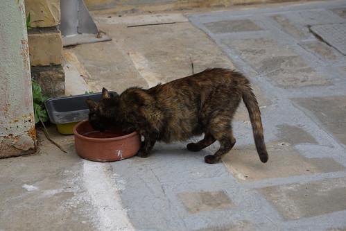 Crete loves cats