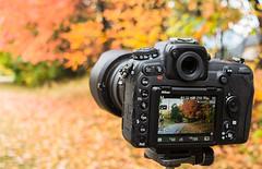 D500 taking in the autumn colors (LEXPIX_) Tags: nikon d500 apsc crop sensor camera touchscreen 4k sony rx100 mk iv lexpix autumn fall foliage