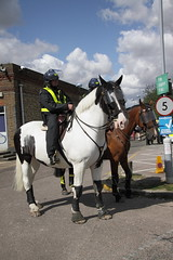 Police horses at Ipswich Station (Ian Press Photography) Tags: ipswich town football club portman road suffolk norwiich city fc 999 police emergency service services match old farm derby championship norfolk horses station horse mounted