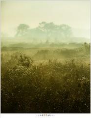 Mist en dauwdruppels (nandOOnline) Tags: morning nature dauw landscape koud december landschap natuur ochtend mist druppels nevel strabrecht vorst sunrise cold fog strabrechtseheide zonsopkomst frost mierlo nbrabant nederland