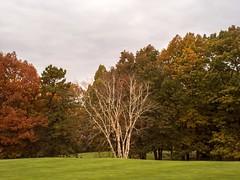 PB020445 - Sticking Out (Syed HJ) Tags: olympusomdem5 olympus em5 fujian35mmf16 fujian35mm fujian 35mm cctvlens nashua nh nashuanh foliage fall fallfoliage