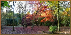 Autumn  coming to its end. (Dan B. Pics.) Tags: cefnonn park woodland autumn trees colour acers maples