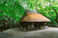 The Pavilion (Pikaglace) Tags: sony a7 nara japan japon trees forest architecture japanese japonais toit chaume straw paille traditional traditionnelle pavillon leaves green vert brown marron