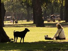 Amigo fiel (Letua) Tags: parque mascota perro mujer robado espalda verde arboles park pet dog woman green trees portrait retrato