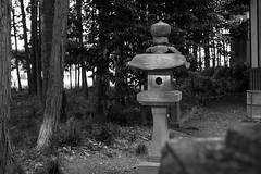 In the grove (odeleapple) Tags: fujifilm xpro1 xf 35mm grove bw tree stone lantern xf35mmf14r