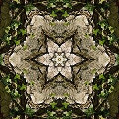 Kaleido Abstract 1547 (Lostash) Tags: art patterns symmetry shapes textures kaleidoscopes abstract nature flora