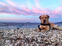 http://ift.tt/1NHxzN3 Che vita da #cani  Buon fine settimana dalla spiaggia della #ghiaie a #portoferraio nello scatto di @sara.autuori87. Continuate a taggare le vostre foto con #isoladelbaapp il tag delle vostre vacanze all'#isoladelba. (isoladelbaapp) Tags: isoladelba elba visitelba portoferraio porto azzurro capoliveri marciana marina di campo rio