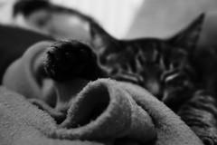 (frogghyyy) Tags: cat kitty macro macrophotography blackwhite bw nature animal natura