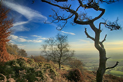 Quantock trees (OutdoorMonkey) Tags: quantocks quantockhills somerset bluesky tree hill hillside countryside outside outdoor scenery sunshine evening rural nature